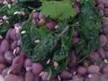 Photo: Kale and Adzuki Bean Salad