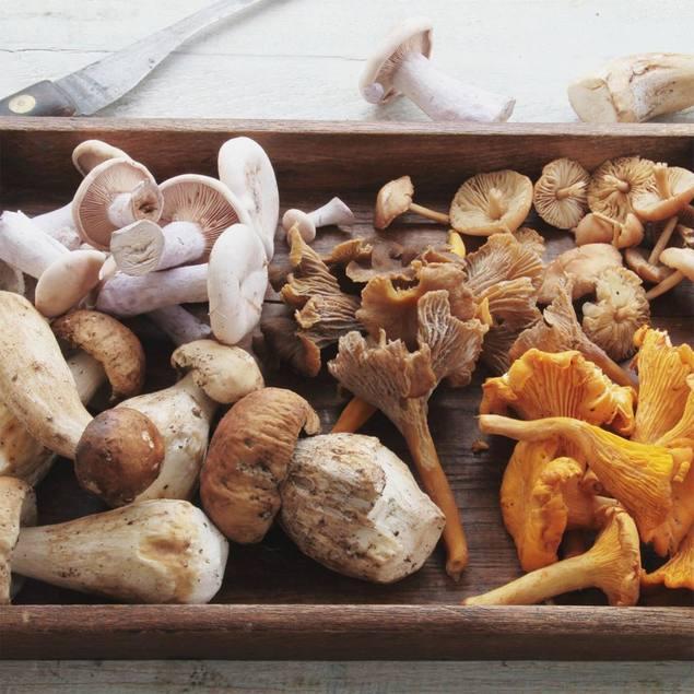 Photo: Mushrooms